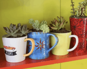 Planter Cup